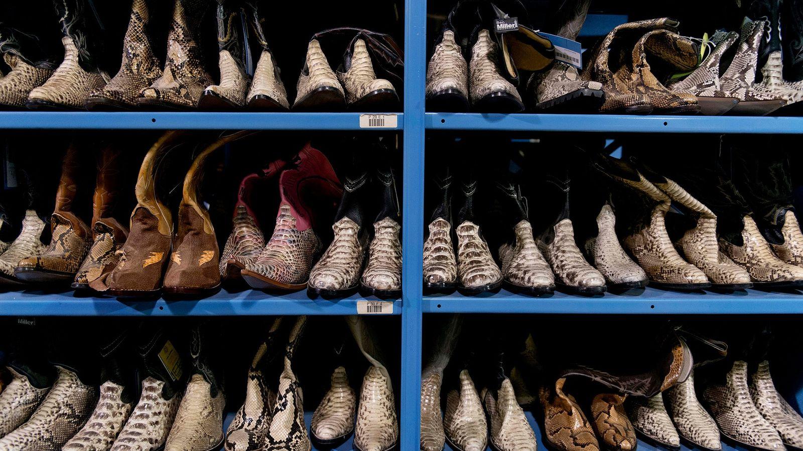 Ces bottes en cuir de reptile illégalement importées ont été saisies par les agents du Fish ...