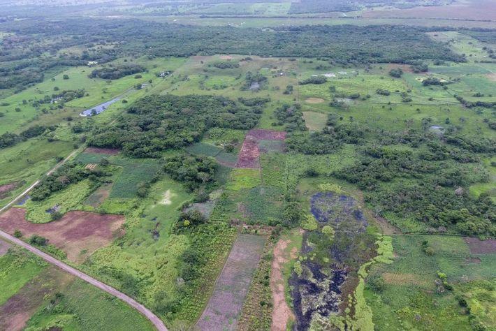 Une vue aérienne d'Aguada Fénix sans LiDAR montre comment le monument était à la fois visible ...