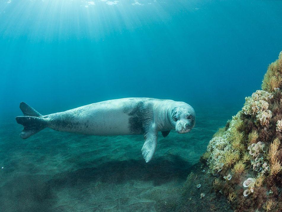 Gyaros : comment l'île grecque est devenue le refuge des phoques moines