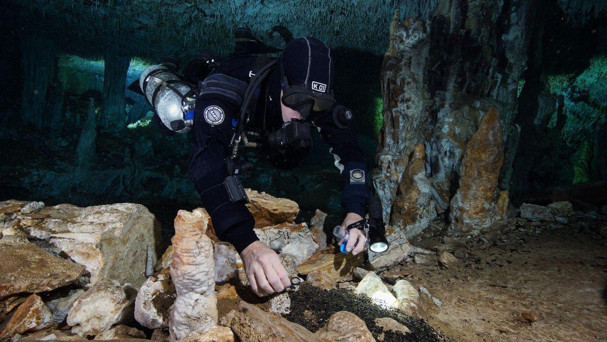 Un plongeur recueille du charbon provenant des feux qui ont jadis illuminé la grotte de La ...