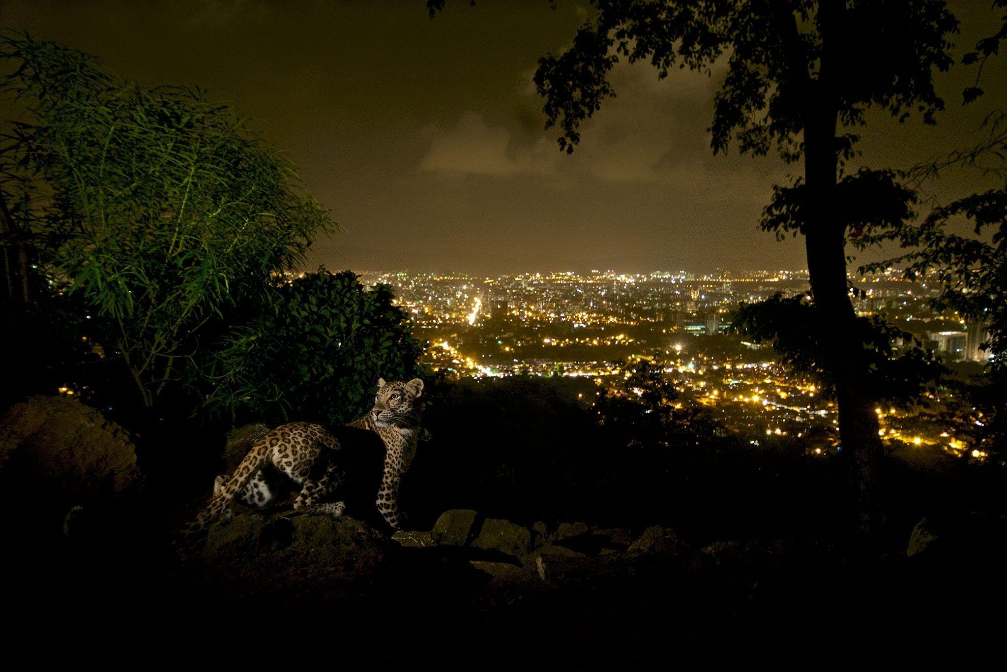 Ce qui est un Cougar dans le monde datant