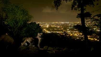 La présence des léopards dans les villes améliore la santé des Hommes