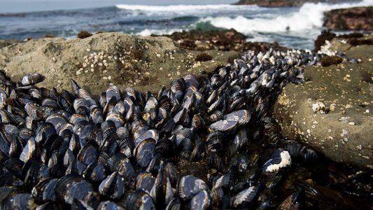 La transmission de cancers chez les créatures marines préoccupe les scientifiques