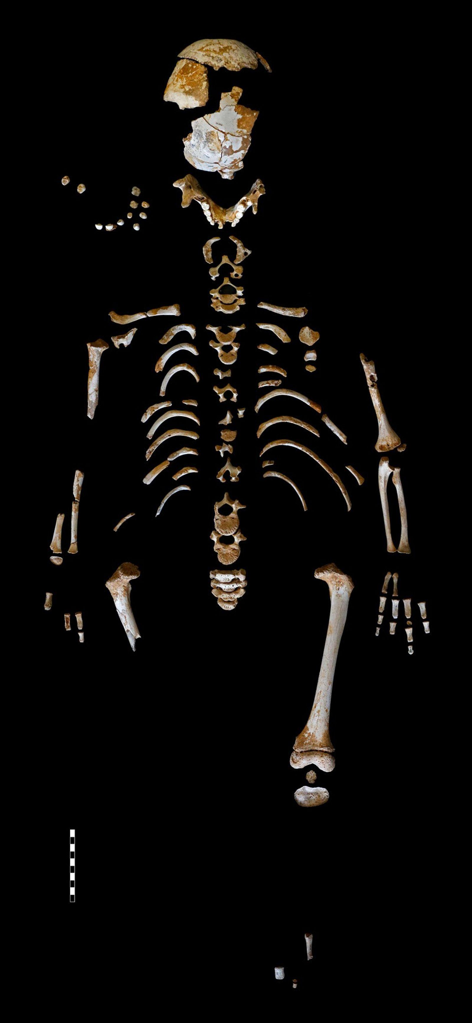 L'incroyable squelette d'un enfant néandertalien, découvert dans la grotte d'El Sidrón en Espagne, nous en apprend ...