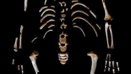 La croissance de cet enfant de Néandertal aurait été similaire à la nôtre