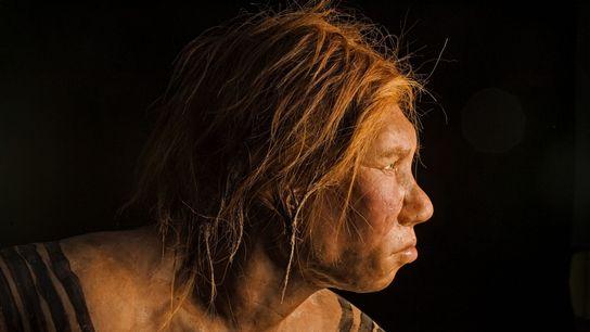 Dévoilée en 2008, la reconstitution de cette femme de Neandertal était la première à être réalisée ...