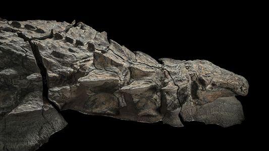 Ce dinosaure cuirassé se servait de ses épines pour communiquer