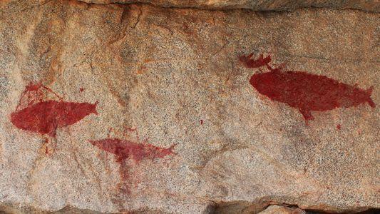 De rares gravures rupestres ont été découvertes au Chili