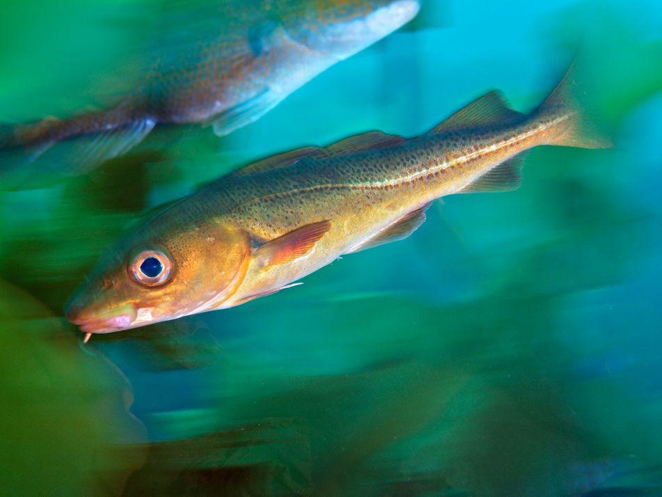 L'homme est en train de détruire l'écosystème ichtyen