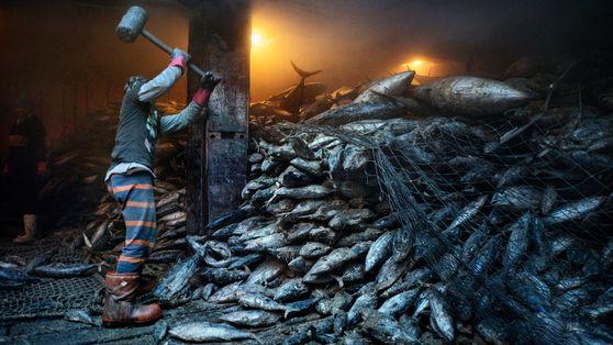 Les océans sont à court de poissons malgré les promesses des gouvernements