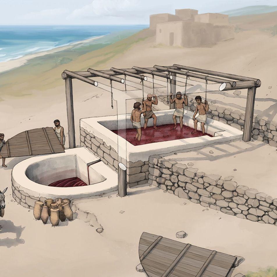 Découverte d'un site vinicole vieux de 2 600 ans au Liban