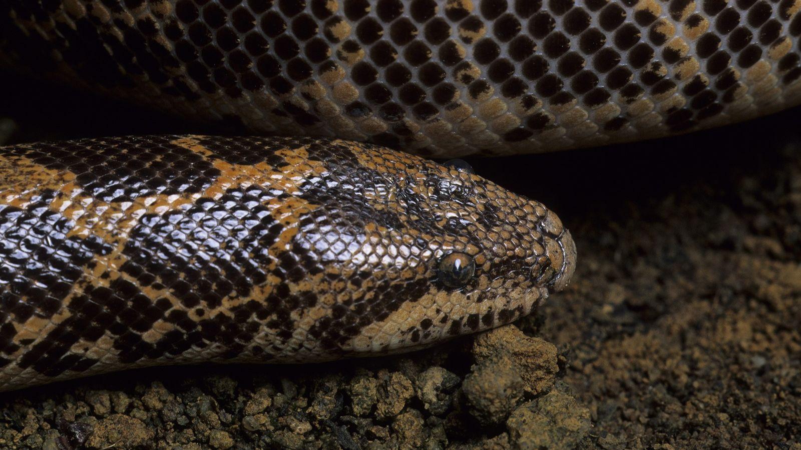 Plus de 4000 reptiles, dont 6 boas des sables du Kenya trouvés dans du fret aérien ...