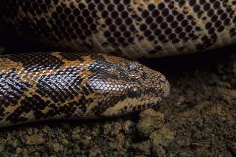 4 000 reptiles ont été sauvés du commerce illégal