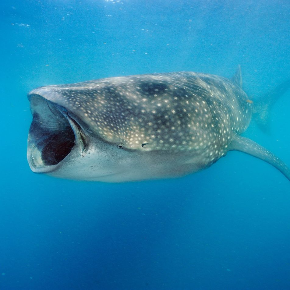 Les découvertes les plus fascinantes sur les requins
