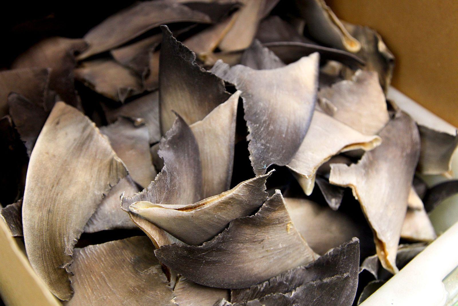 Les États-Unis seraient complices du trafic d'ailerons de requins à leur insu