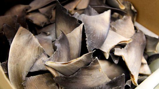 Si les États-Unis ne sont pas de gros producteurs ou consommateurs d'ailerons de requins, l'emplacement du ...