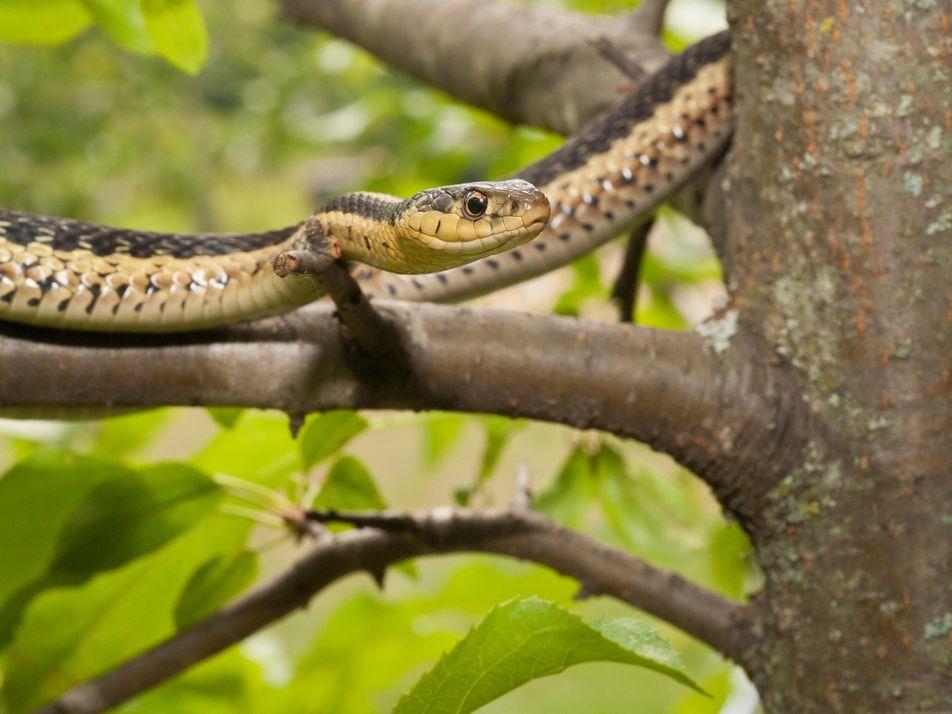 Les serpents aussi se lient d'amitié