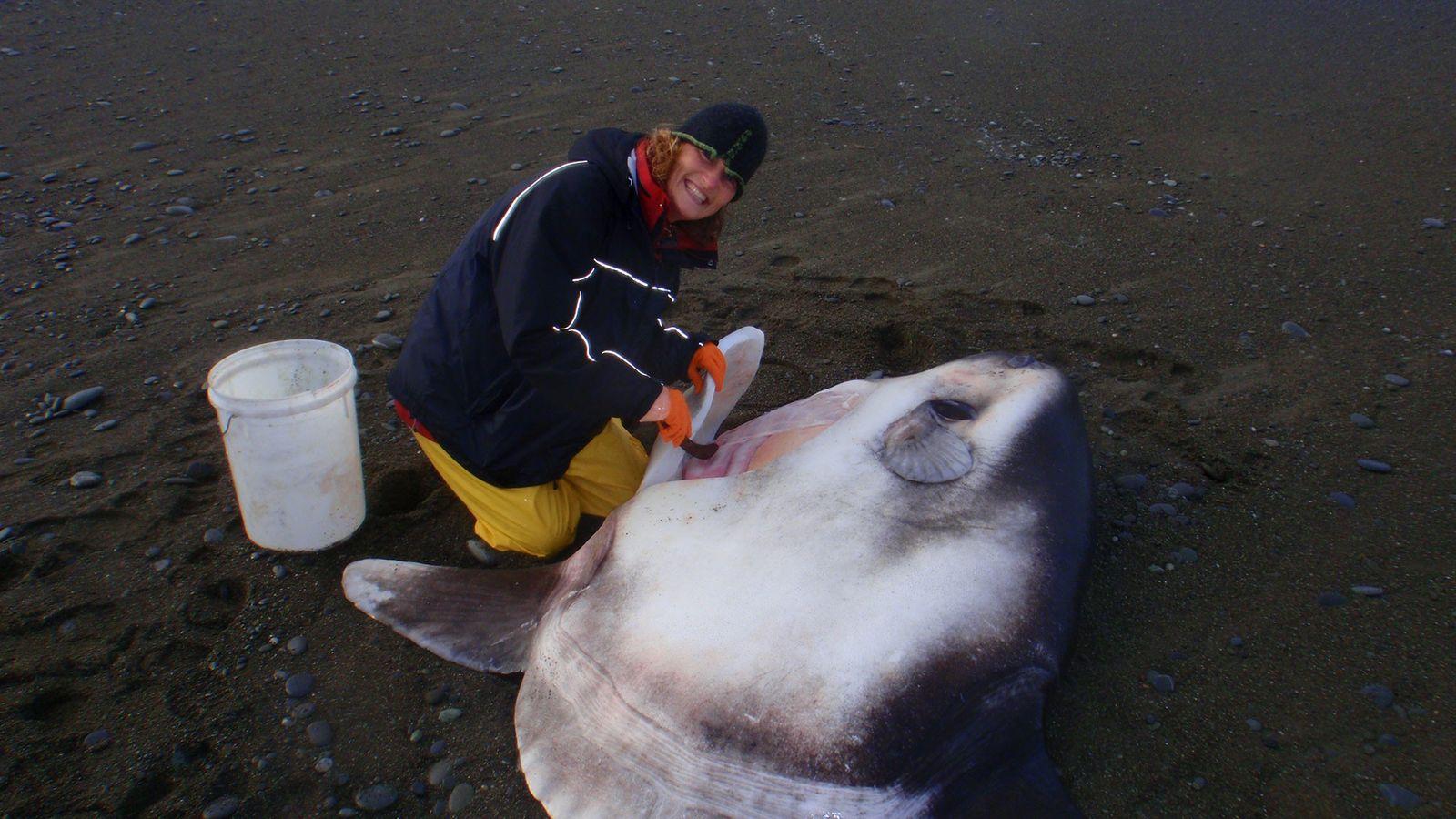 01-sunfish-new-zealand-hoodwinker