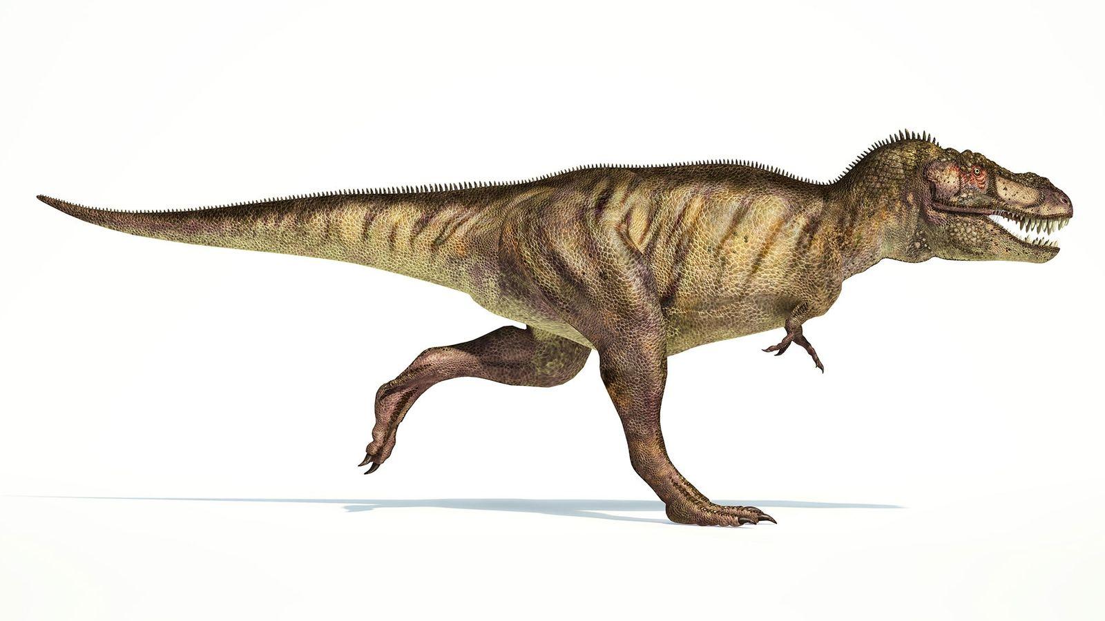 Ils semblent ridicules sur son corps immense, mais les bras du Tyrannosaurus Rex, longs d'1m, auraient ...