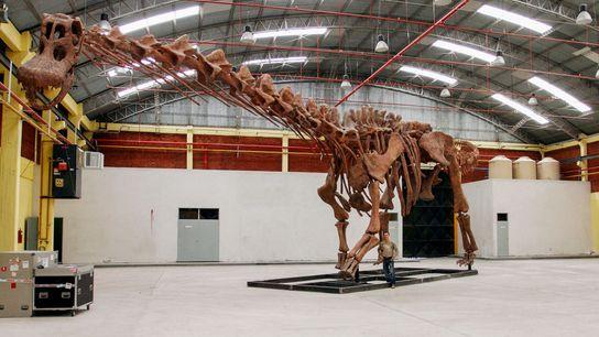 Une reproduction du titanosaure tout juste baptisé Patagotitan mayorum.