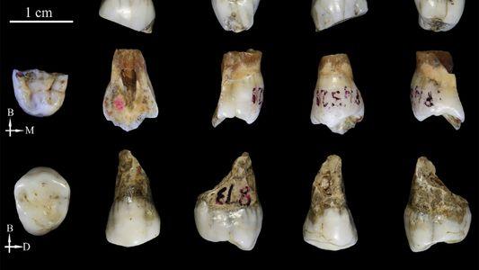 Ces dents appartiendraient à un mystérieux ancêtre de l'Homme