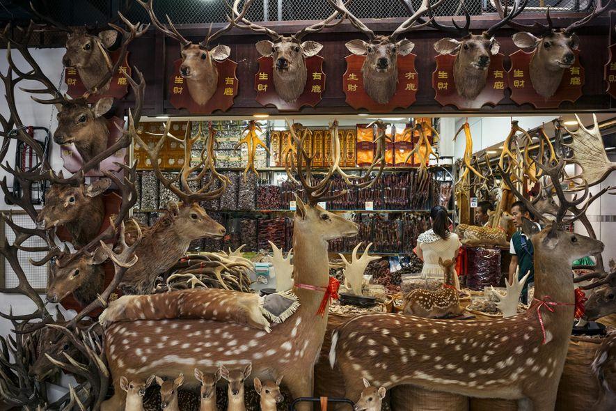 L'impact de la pharmacopée traditionnelle chinoise sur la faune