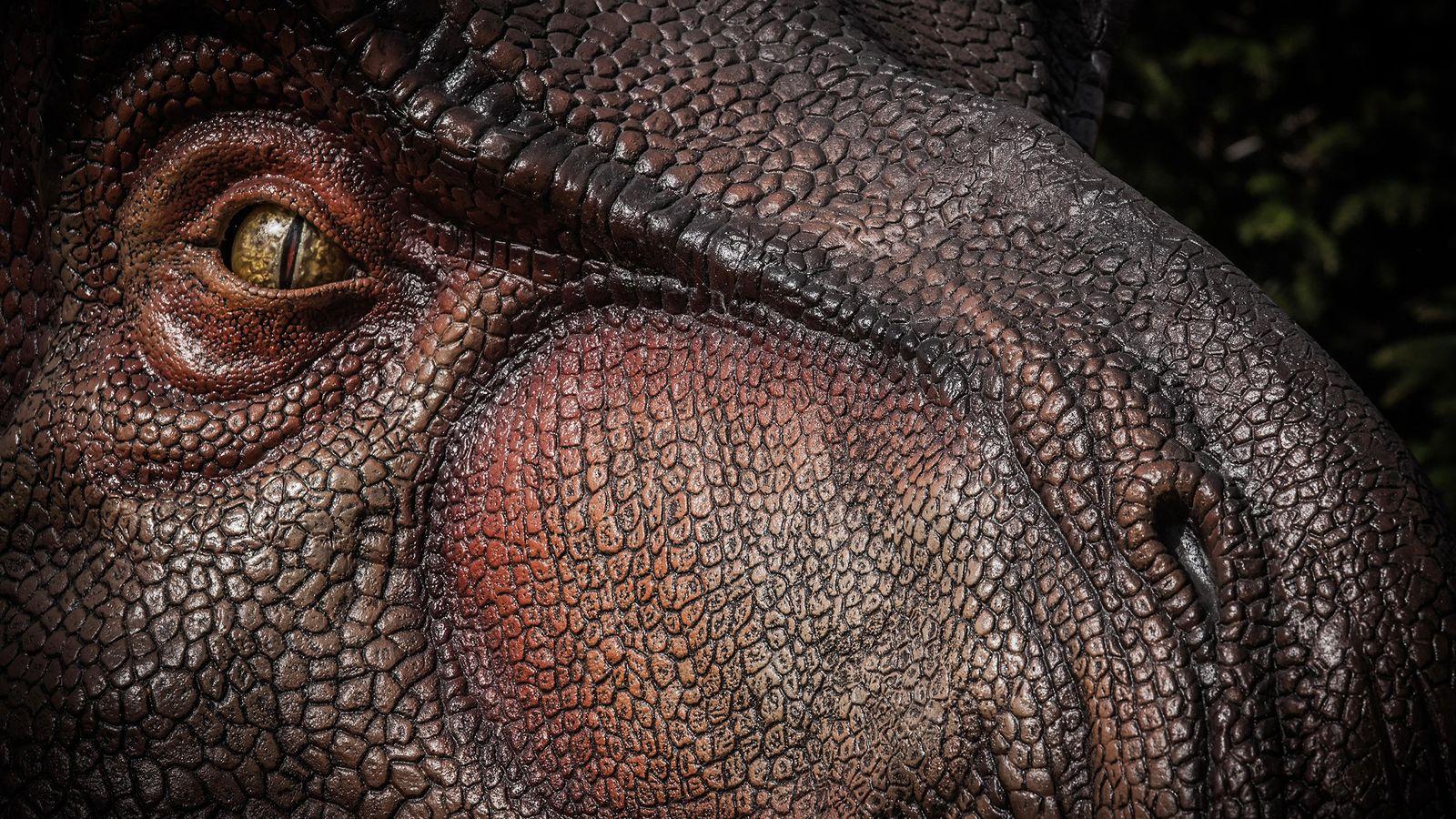 Tyrannosaurus rex , vu ici dans une illustration, avait probablement un odorat légèrement moins puissant que ...