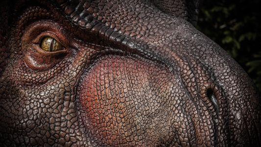 Découverte : le T. rex avait un odorat exceptionnel