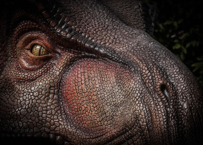 Tyrannosaurus rex, vu ici dans une illustration, avait probablement un odorat légèrement moins puissant que celui ...