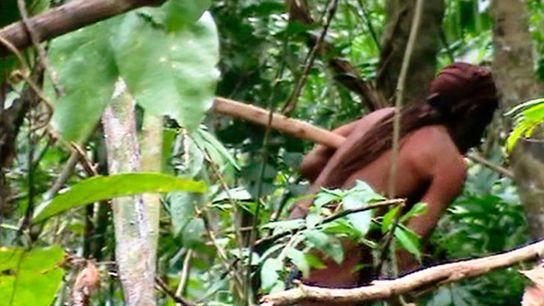 Aperçu furtif du « survivant solitaire » dans la réserve indigène de Tanaru, située dans l'État ...