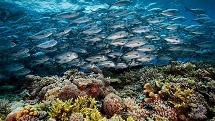 Le récif corallien de Tubbataha, parfait exemple d'un atoll préservé
