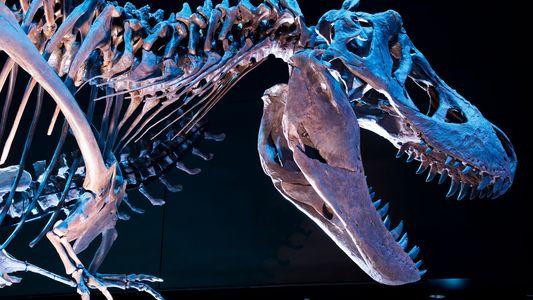 Le Tyrannosaurus rex décrypté par la science
