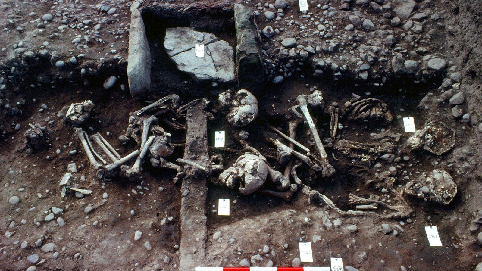 Photo prise en 1982 après l'excavation de la fosse commune montrent les restes humains mis au ...