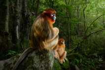 Le photographe hollandais Marsel van Oosten a remporté le grand prix du concours avec cette photo ...