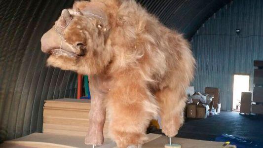Un rhinocéros laineux reconstitué à partir de restes momifiés