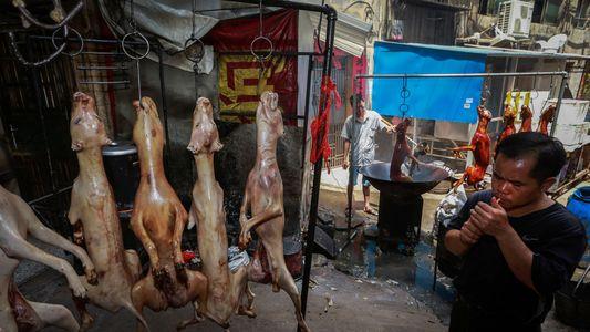 La Chine interdit la vente de viande de chien au festival de Yulin