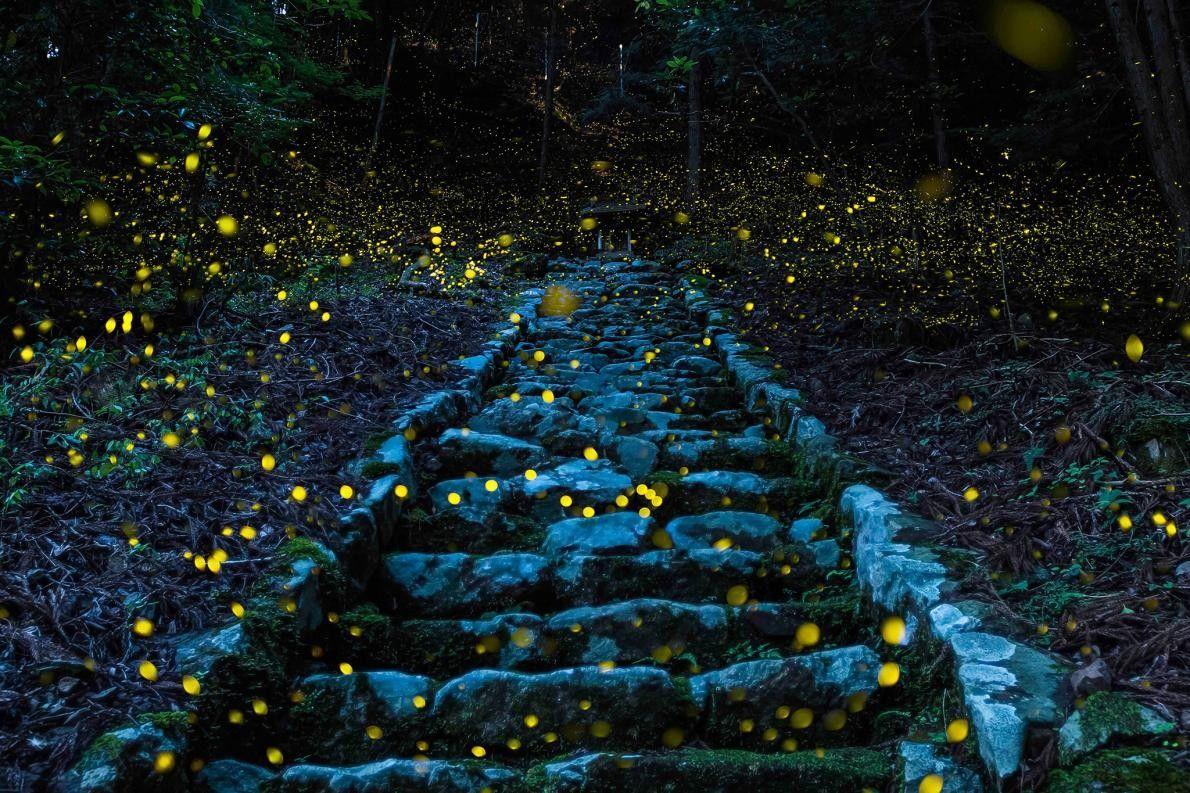 « Cette photo a été prise dans une forêt. » – Y. Takafuji