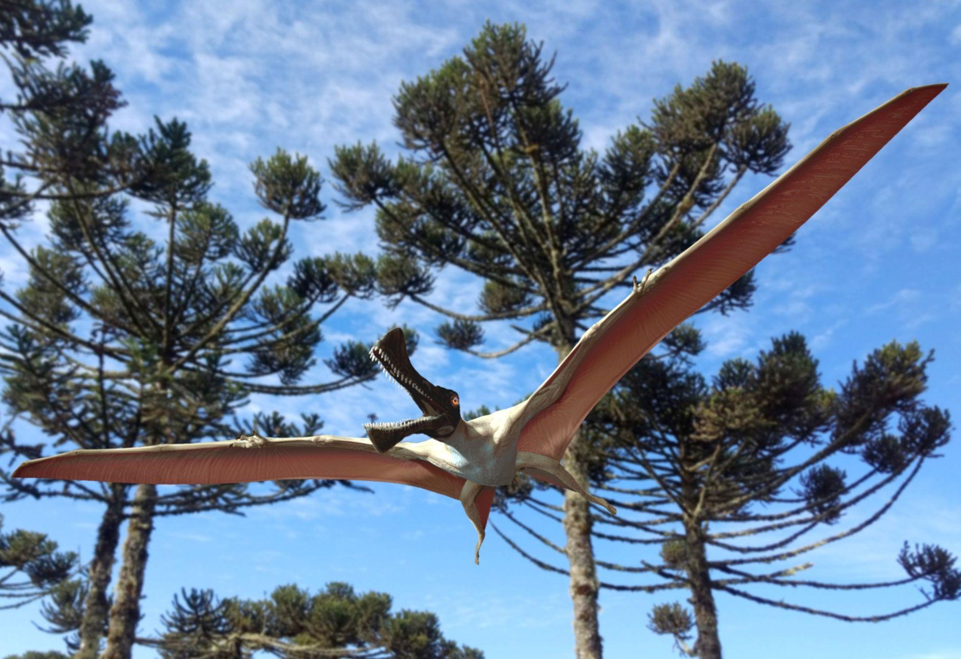 Avec son envergure frôlant les quatre mètres, Ferrodraco lentoni s'exécutait en virtuose dans le ciel de ...