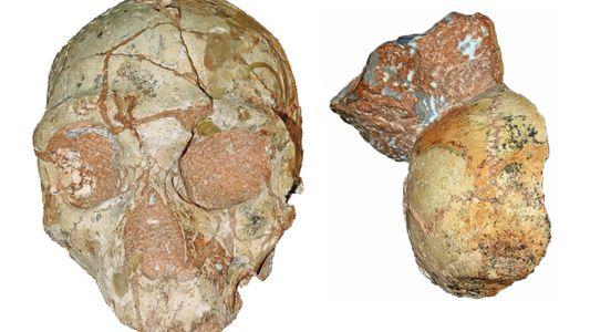 Ce crâne est le plus vieux fossile humain jamais découvert hors d'Afrique