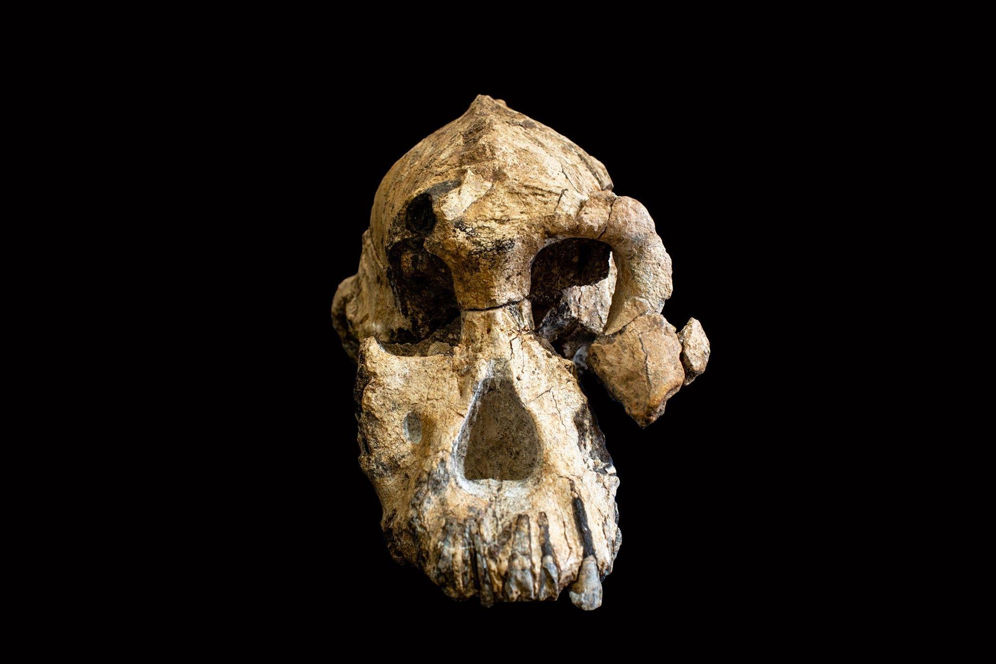 Éthiopie : découverte du plus vieux crâne d'australopithèque jamais mis au jour | National Geographic