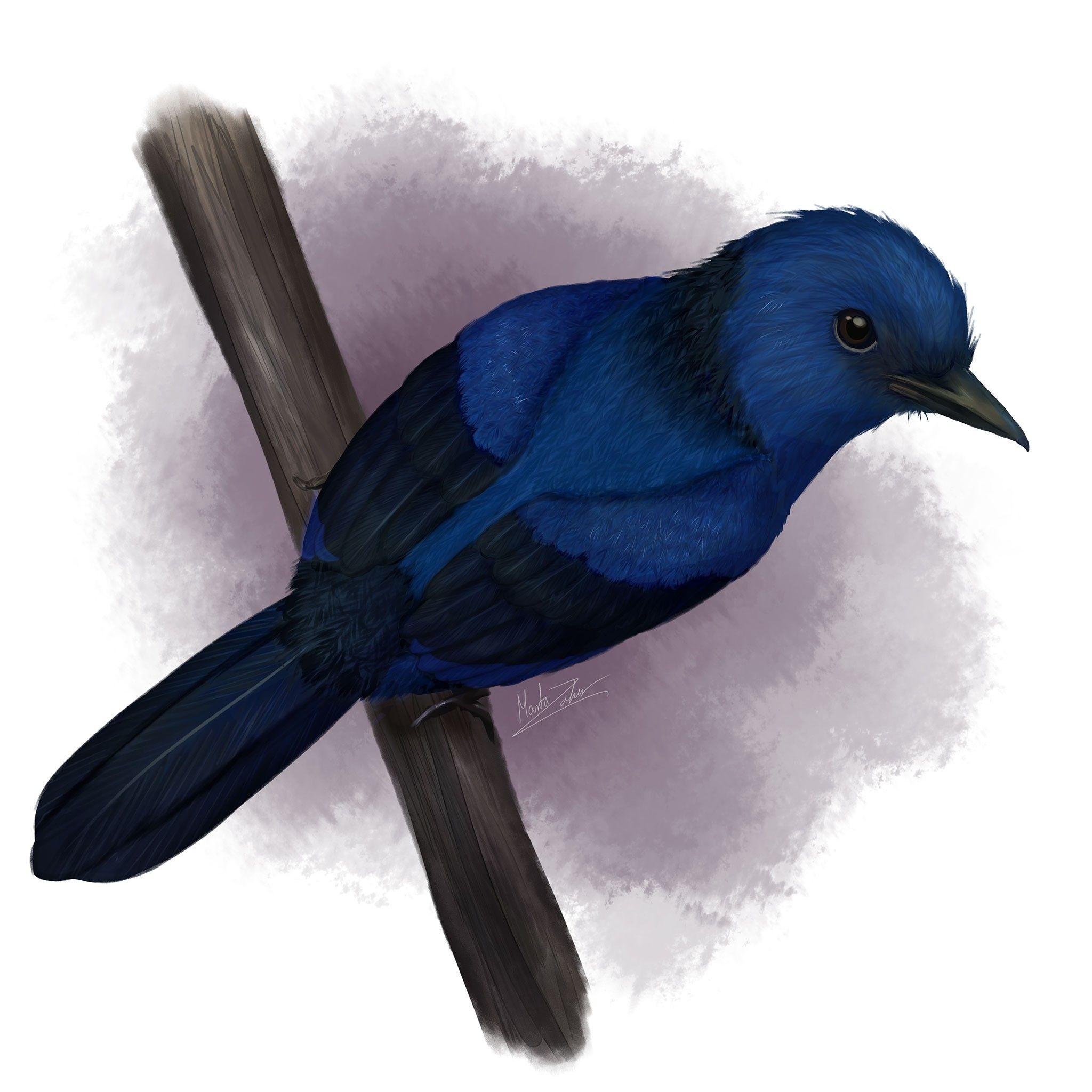 Découverte du premier fossile d'oiseau aux plumes bleues | National Geographic