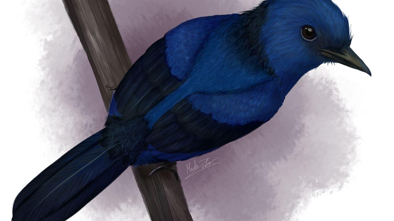 Selon les analyses des chercheurs, le plumage d'Eocoracias brachyptera aurait été bleu. Cette oiseau vivait il ...
