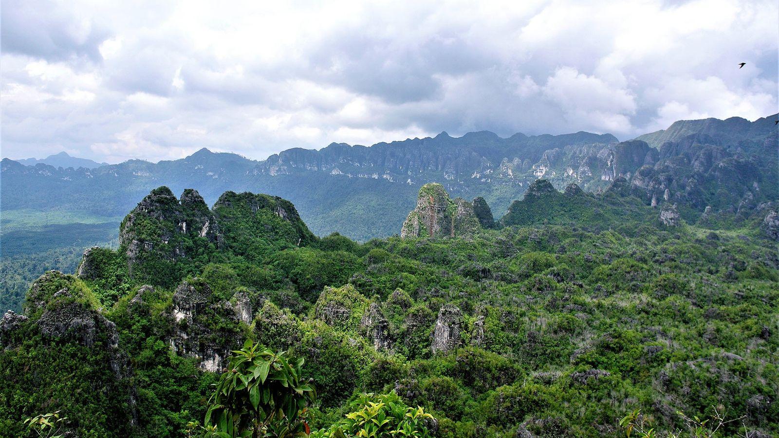 Les peintures pariétales sont cachées dans les grottes de roche calcaire du Kalimantan oriental, en Indonésie, ...