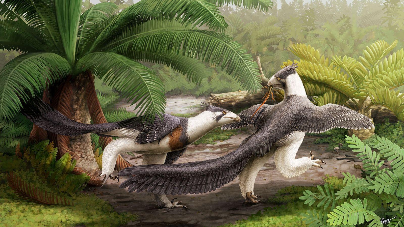Sur cette illustration, un couple de Hesperornithoides miessleriis chasse au cœur d'une forêt qui aurait aujourd'hui ...
