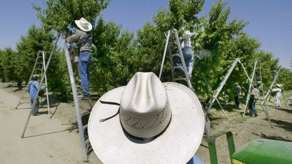 Les États-Unis s'apprêtent à interdire le Chlorpyrifos, un dangereux insecticide