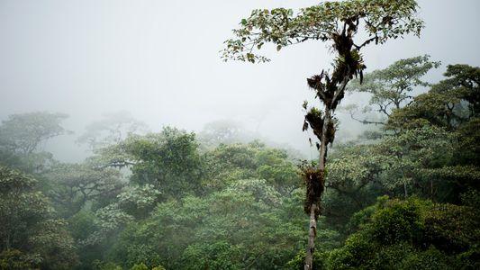 Équateur : l'histoire du peuple Quijos enfouie au cœur d'une forêt de nuages