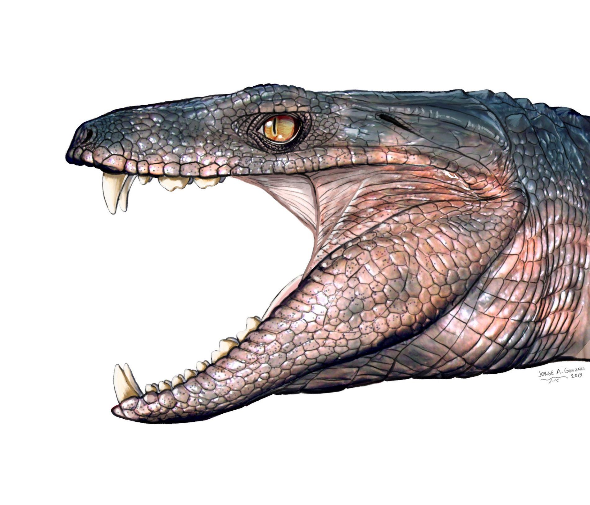 L'espèce éteinte de crocodilien Pakasuchus (illustrée ci-dessus) était herbivore selon les analyses menées sur ses dents ...