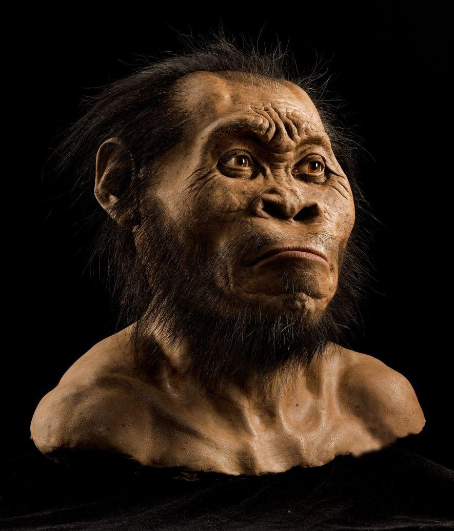 Malgré certains aspects primitifs, le visage, le crâne et les dents présentent beaucoup de caractéristiques modernes ...