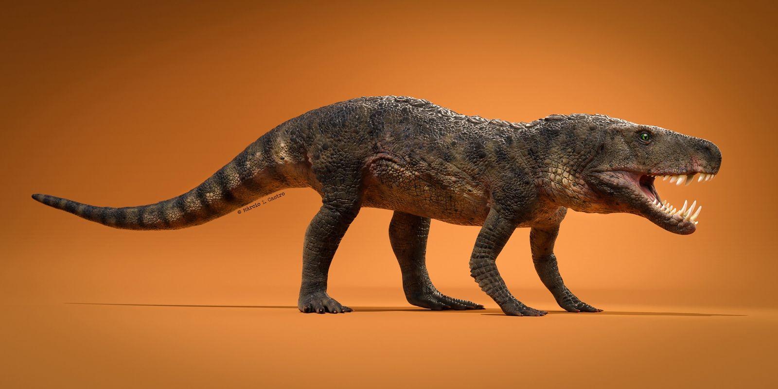Paléontologie : découverte d'un crocodile broyeur d'os au Brésil