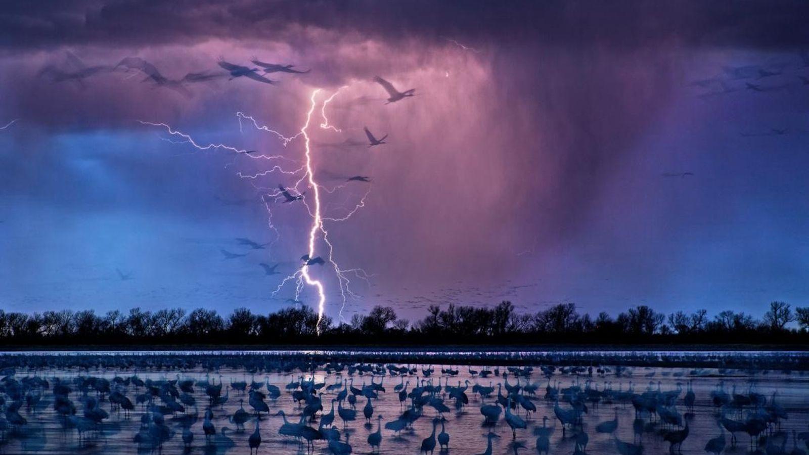 Les oiseaux des Grandes Plaines pataugent au bord de l'eau alors qu'une tempête commence à prendre ...